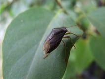 Неизвестная черепашка на лист Стоковые Изображения