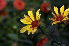 Неизвестный желтый цветок стоковое фото rf