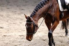 Неизвестный кандидат едет на событии лошади dressage крытом в ridin стоковая фотография