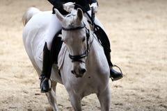 Неизвестный кандидат едет на событии лошади dressage крытом в ridin стоковое изображение rf