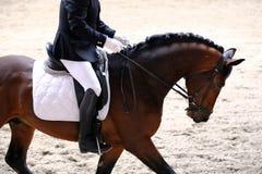 Неизвестный кандидат едет на событии лошади dressage крытом в ridin стоковое изображение