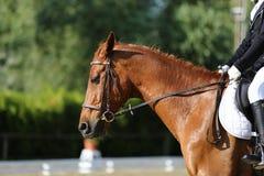 Неизвестный кандидат едет на событии лошади dressage крытом в ridin стоковые фото
