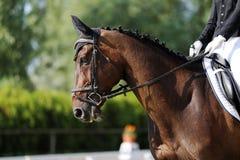 Неизвестный кандидат едет на событии лошади dressage крытом в ridin стоковая фотография rf