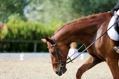Неизвестный кандидат едет на событии лошади dressage крытом в ridin стоковое фото rf