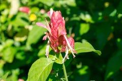 Неизвестный красный цветок в парке стоковые фото