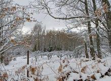 Неимоверная белая зима в ландшафте Стоковое Фото