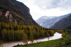 Неимоверная долина ландшафта гор Altai с деревьями, холмами и рекой Стоковое Фото