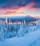 Неимоверный восход солнца зимы в прикарпатских горах с бухтой снега Стоковая Фотография RF