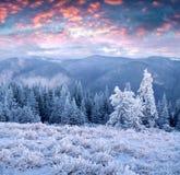 Неимоверный восход солнца зимы в прикарпатских горах с cowe снега Стоковая Фотография