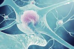 Нейроны нервной системы нервные клетки иллюстрации 3d Стоковая Фотография RF