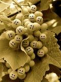 нейтраль виноградины Стоковое Изображение