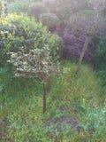Отрезанные деревья стоковая фотография rf