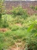 Некоторые заводы и деревья с зеленой травой Стоковые Изображения RF