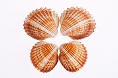 Некоторые из seashells изолированных на белой предпосылке Стоковое фото RF