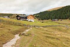 Некоторые коровы в выгоне в di Funes Val в Италии Стоковая Фотография