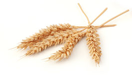 Некоторые колоски пшеницы стоковые изображения