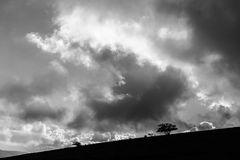 Некоторые маленькие силуэты дерева и завода на холме против неба Стоковая Фотография