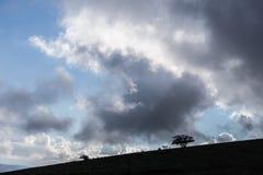 Некоторые маленькие силуэты дерева и завода на холме против сини Стоковое Изображение RF