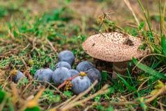 Некоторые одичалые грибы и ягоды в лесе Стоковое Фото