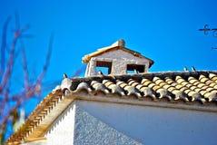 Некоторые птицы на крыше Стоковое фото RF