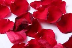 Некоторые розовые лист на белой предпосылке Стоковые Изображения