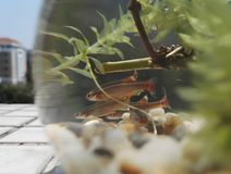 Некоторые рыбы в цилиндре стоковые фото