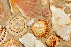 Некоторые seashells на песке пляжа Стоковые Фотографии RF