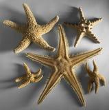 некоторые starfishes стоковая фотография