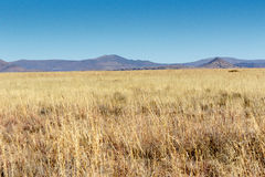 Некоторый желтый цвет на национальном парке зебры горы Стоковое Изображение