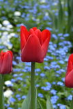 Некоторый красный цвет некоторой синью Стоковое фото RF