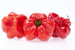 Некоторый овощ habanero перца красного chili изолированного на белом ба Стоковая Фотография