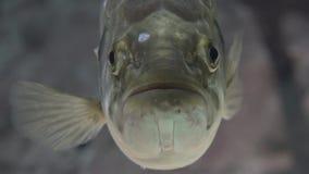 Некрасивая морская флора и фауна рыб видеоматериал