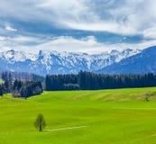 Немецкая идилличная пастырская сельская местность весной с Альпами в backg Стоковое фото RF