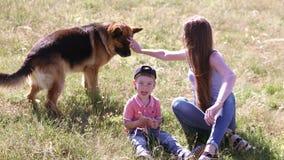немецкая овчарка в семье
