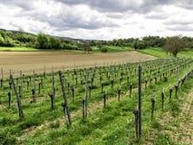 Немецкие поля земледелия Стоковые Фотографии RF
