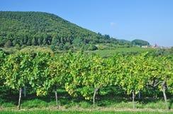 Немецкий винный маршрут, Palatinate, Германия Стоковое фото RF