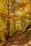 Немецкий лес в осени Стоковое Изображение RF