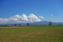 Немецкий пастырский ландшафт Стоковое фото RF