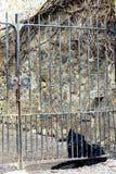 немецкий чабан Стоковые Фотографии RF