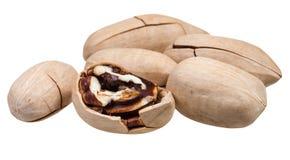 Немногие пеканы в раковине изолированной на белизне Стоковое Изображение RF