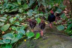 Немногие птицы в джунглях зоопарка Стоковое Изображение