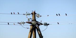 Немногие птицы на электрических проводах Стоковая Фотография RF