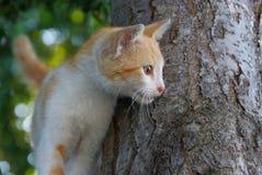 Немногое белый котенок имбиря стоит на черном стволе дерева в парке стоковые изображения