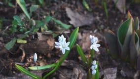 Немногое белый цветок