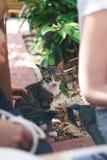 Немногое кот в центре города стоковые изображения