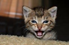 Немногое красочный новичок, коты стоковое изображение