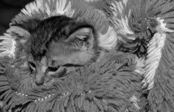 Немногое красочный новичок, коты стоковая фотография rf