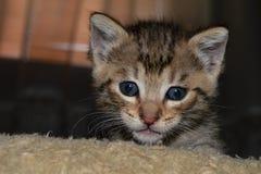 Немногое красочный новичок, коты стоковые фотографии rf
