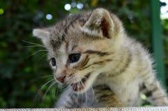 Немногое красочный новичок, коты стоковое изображение rf