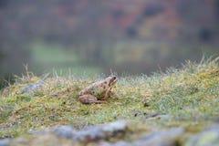 Немногое лягушка во влажной траве стоковое изображение rf